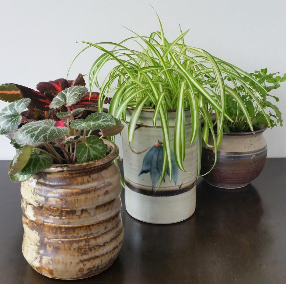 Jars plant