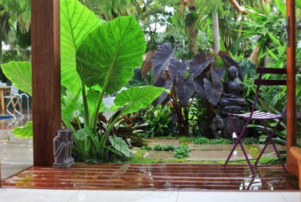 Create Your Own Tropical Garden - Tropical backyard ideas