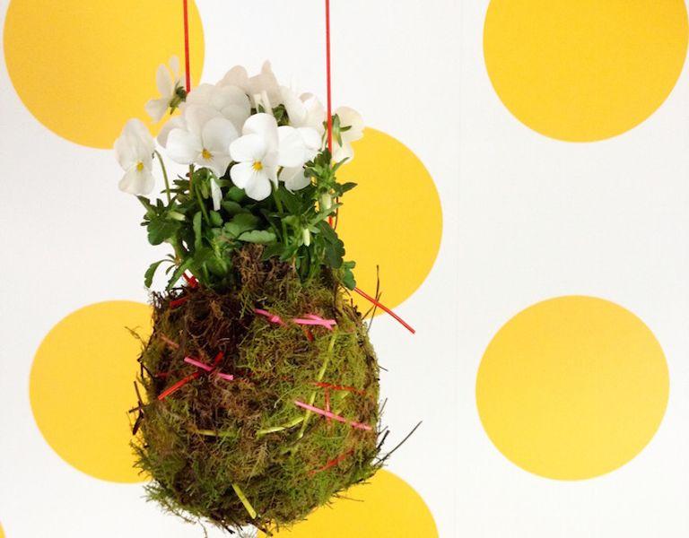 kokedama hanging plant