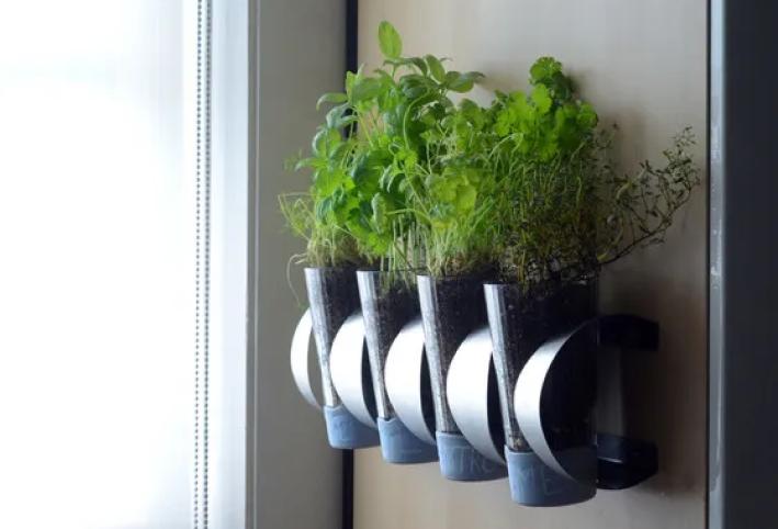 Hang Your Indoor Herb Garden Using A Wine Rack