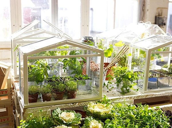Affordable Mini Greenhouse By IKEA Design Ideas