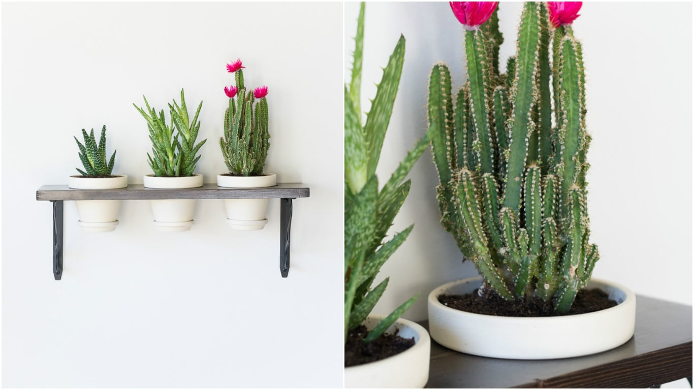 Hanging shelf planter
