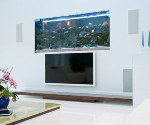 Aquariums – a forever beautiful decoration for any type of space