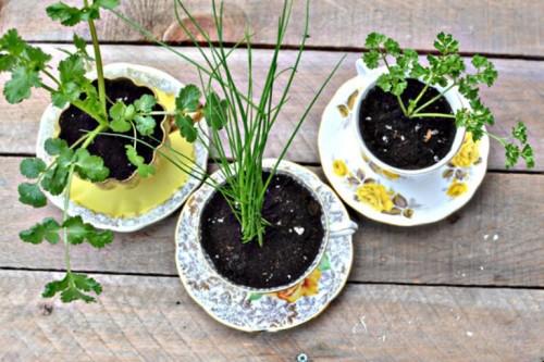 Mini Garden Design Home Design 4 cute diy mini-garden designs