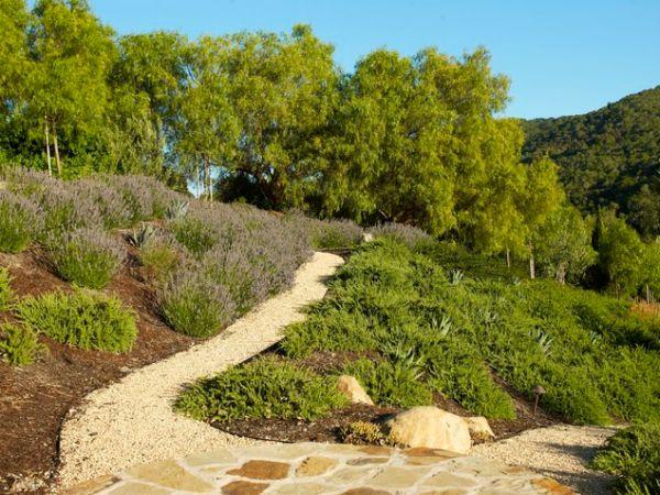 hillside planting