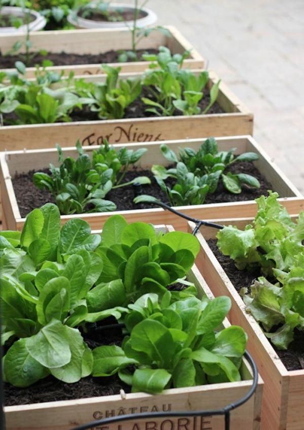 Urban Vegetable Garden Raised Beds