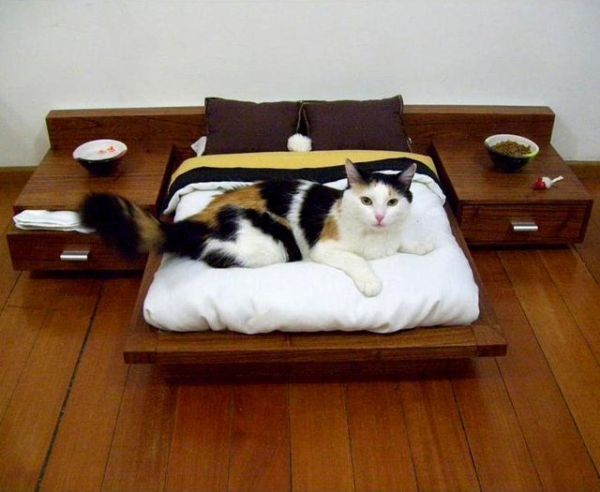 Stylish Furniture And Accessories For Modern Dogs · View In Gallery