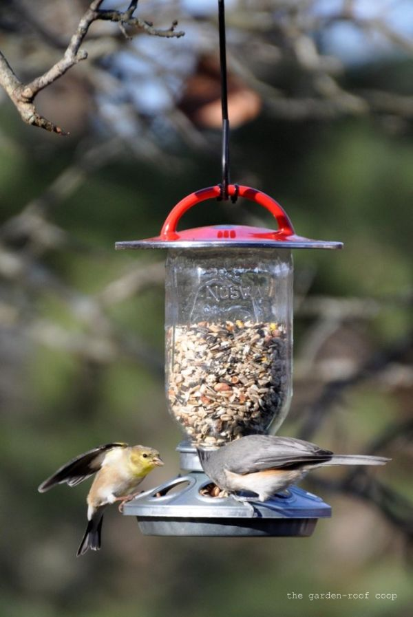 10 Great Ideas For Making Bird Feeders