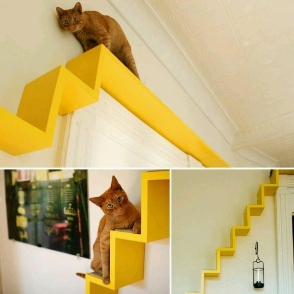 take the time to build cat shelves fun for both you and your pet rh homedit com Indoor Catwalks for Cats Making Cat Wall Shelves