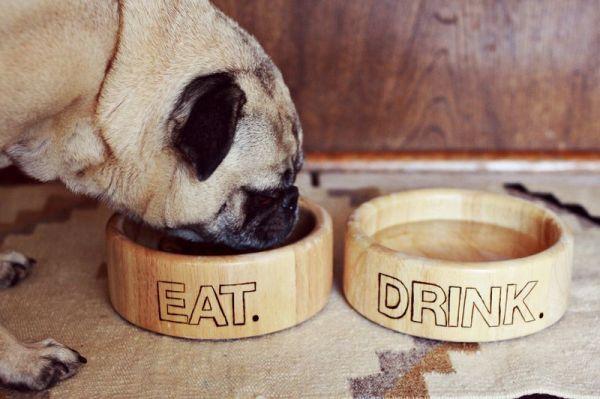 11 Creative Diy Dog Bowl Ideas For Your Pet