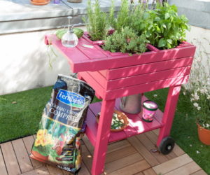 Add color to your garden with eye-catching accent details