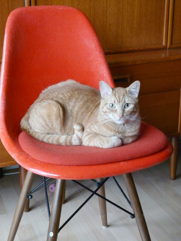 Good 30 Cute Cats That Love The Eames Chairs