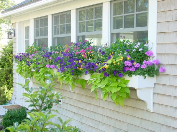 Window Bo – They Really Have Curb Appeal on window garden designs, window box planting designs, window wall designs, indoor window boxes for building designs, diy window box designs, cedar wall designs, window kitchen designs, window greenhouse designs, window box plans, window pergola designs, window sills designs, window home designs, window trellis designs,
