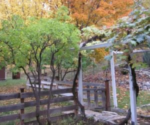 Enjoy the Fall Weather in a Fantastic Backyard