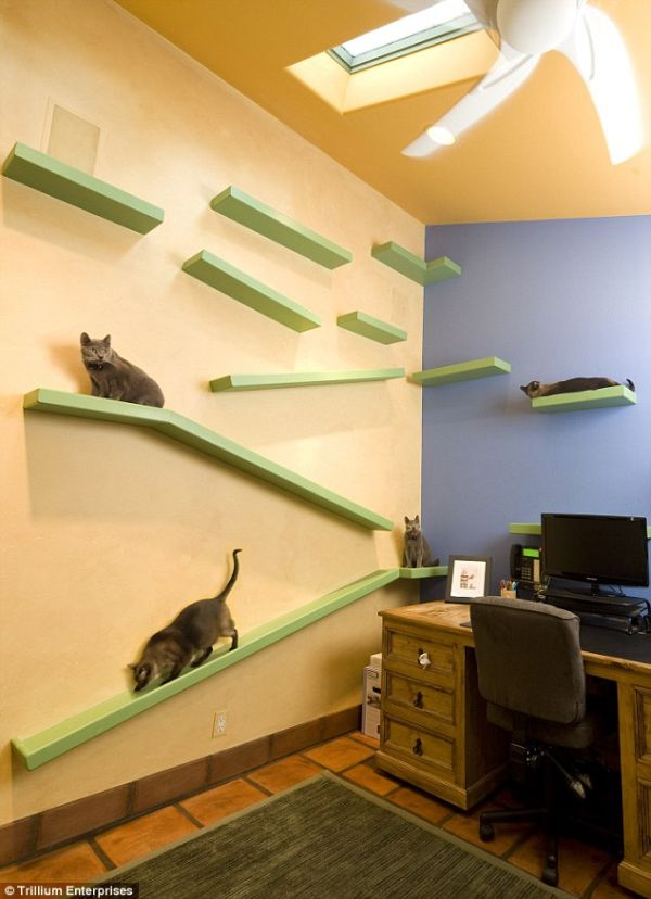 Renovated House In California Becomes A Cat Paradise
