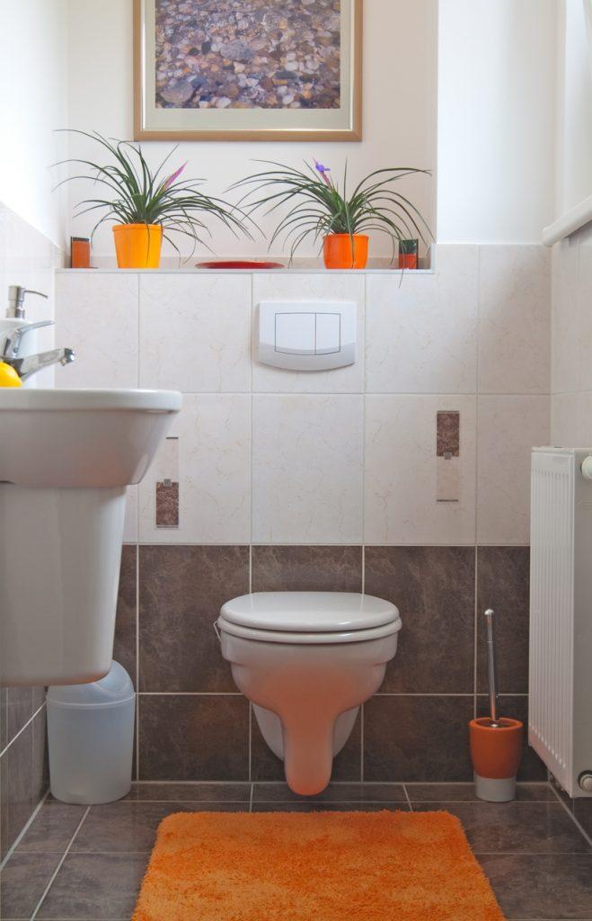 Bromeliads for bathroom