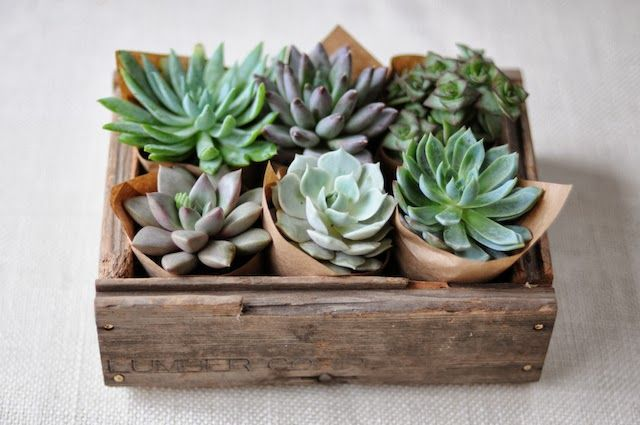 Sprinkling amp Decorating With Succulents Around The House