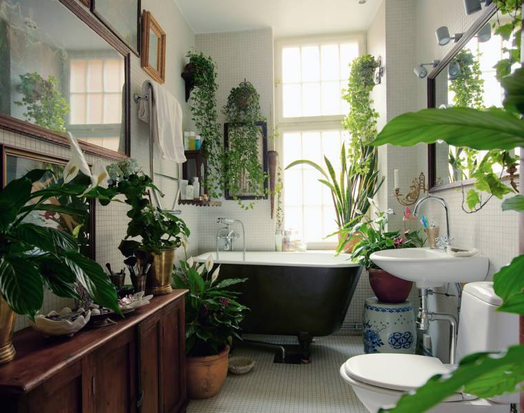 Good Plants For Bathroom. View In Gallery