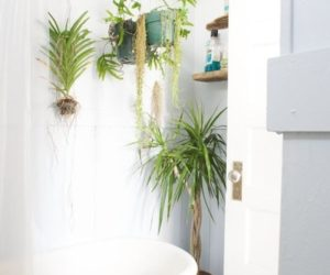 Best Plants That Suit Your Bathroom – Fresh Decor Ideas