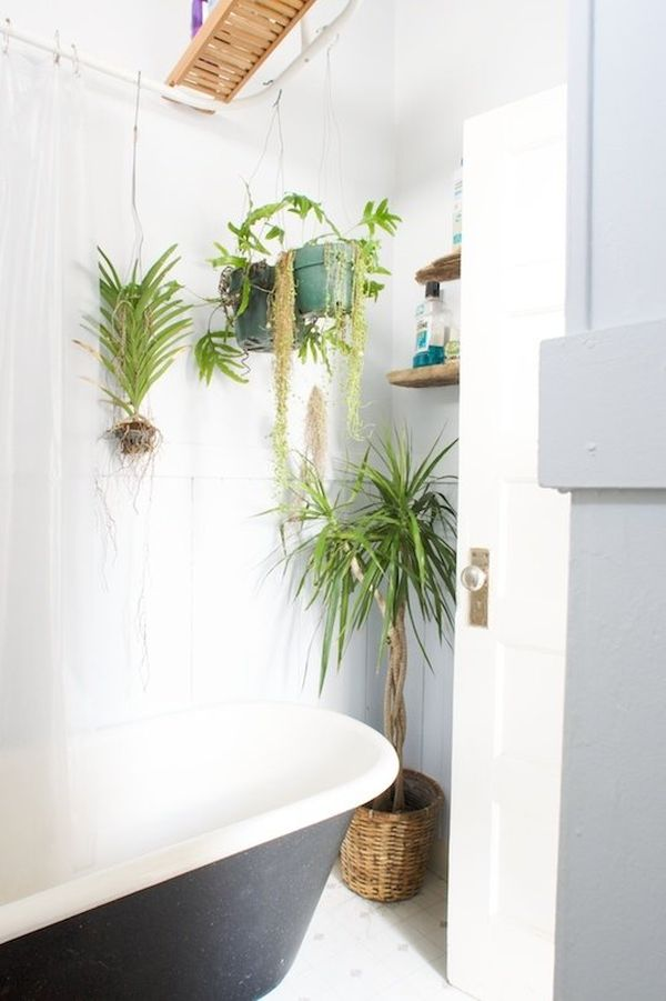 Bathroom Plants Part - 29: Best Plants That Suit Your Bathroom - Fresh Decor Ideas