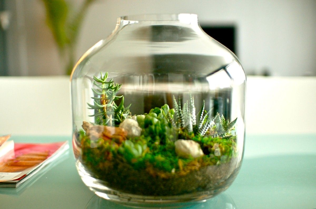 Sprinkling Decorating With Succulents Around The House