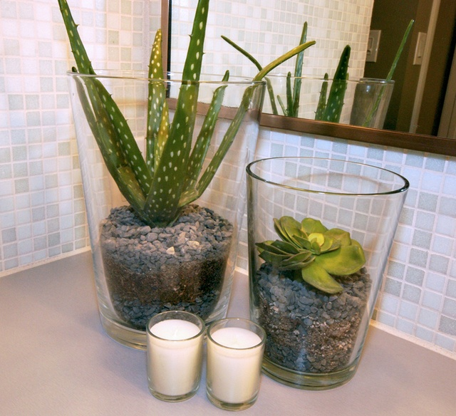 Best plants that suit your bathroom fresh decor ideas - Decorer une salle de bain ...