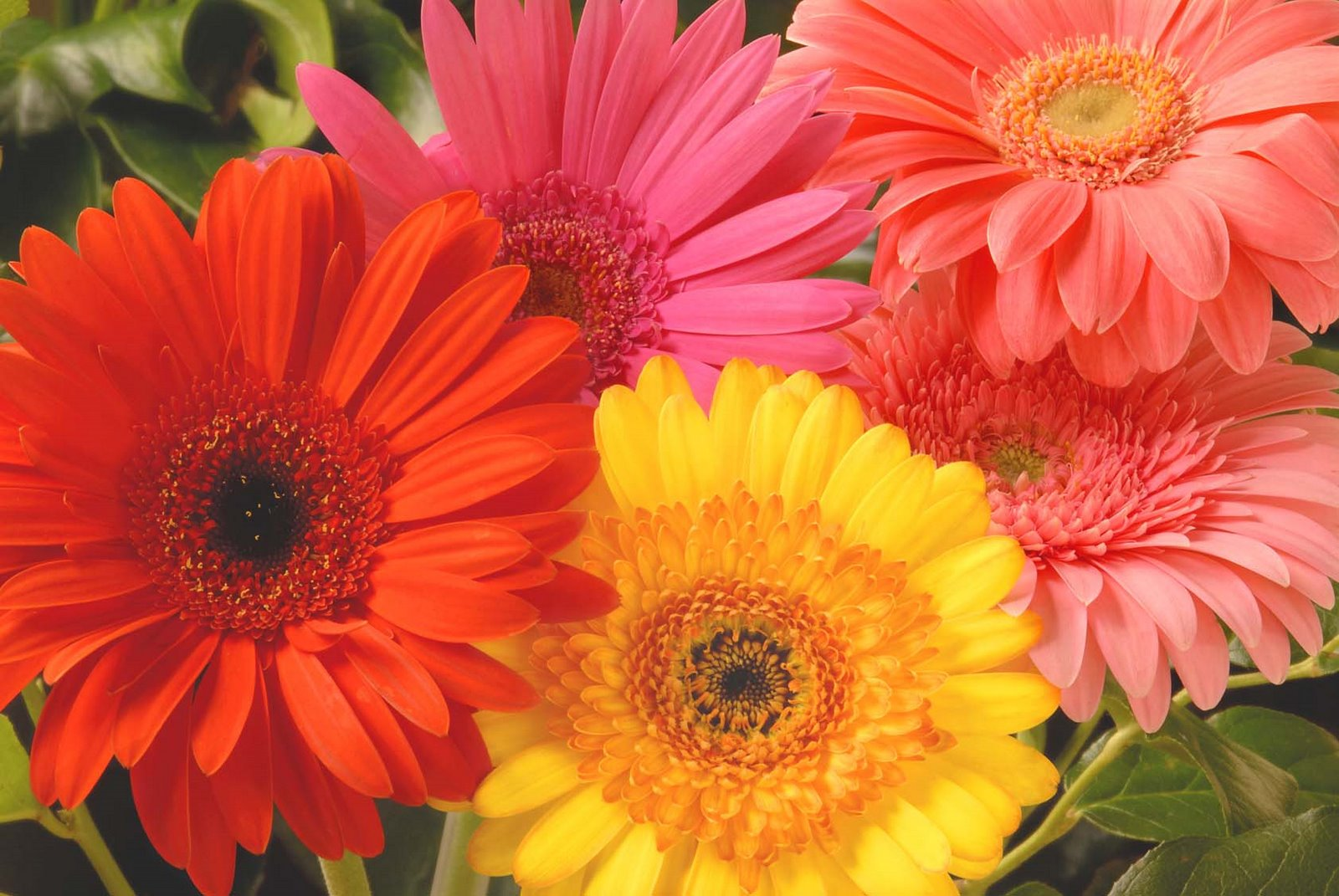 Easy pretty flower combination ideas for landscaping 2 tulips gerber daisies mightylinksfo