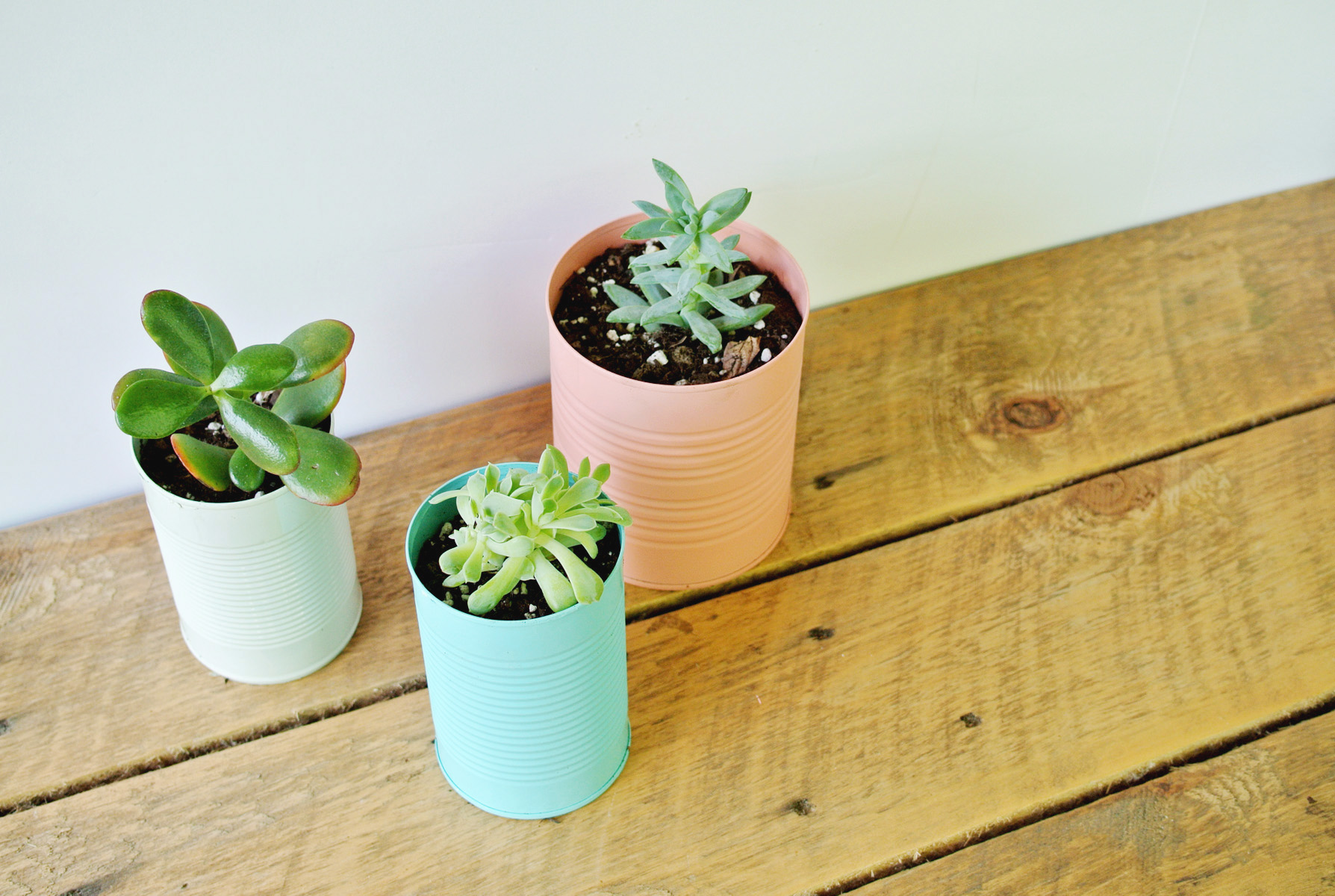 colorful tin can planter DIY
