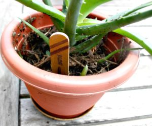 DIY Wooden Plant Markers