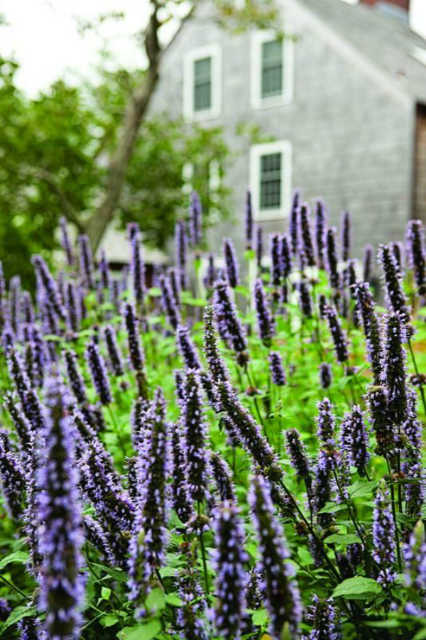 10 Best Plants For Your Autumn Garden