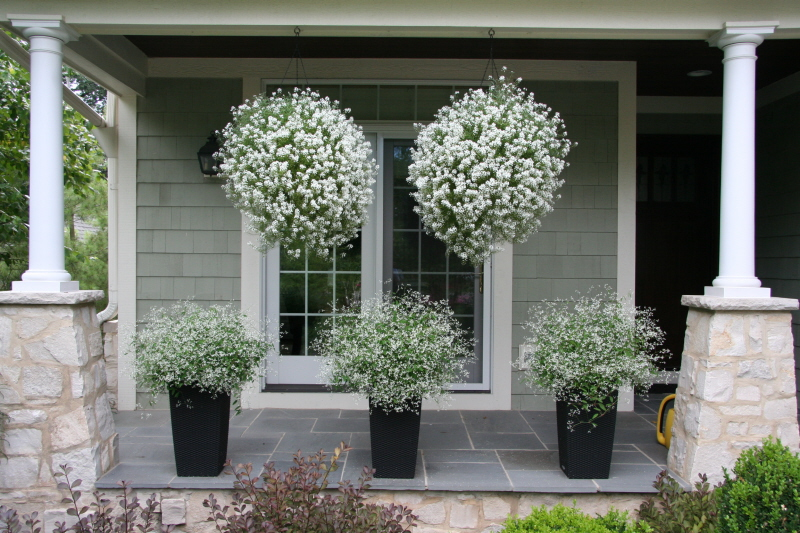 Curb appeal 20 modest yet gorgeous front yards - How to hang plants in front of windows ...