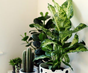 DIY Black and White Planter