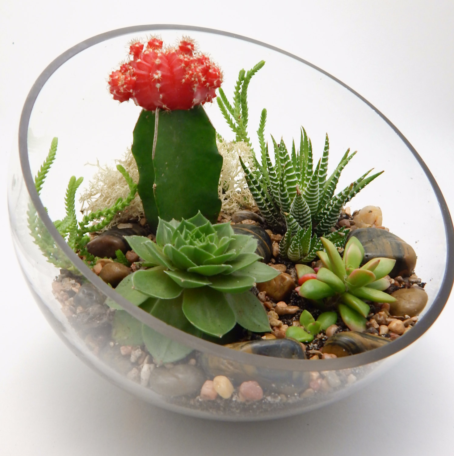 How to create and care for your stunning succulent for Grand aquarium rond