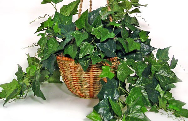 Low light indoor plants you can decorate with for Low maintenance indoor flowering plants
