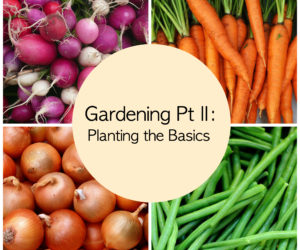 Gardening Pt II: Planting the Basics