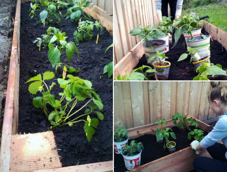 Gardening Tips Pt I: DIY Raised Beds