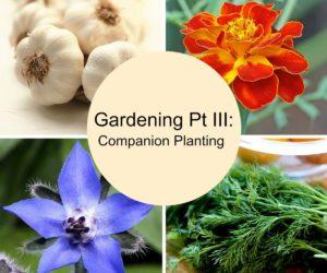Gardening Tips Pt III: Companion Planting