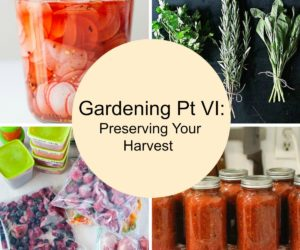 Gardening Pt VI: Preserving Your Harvest