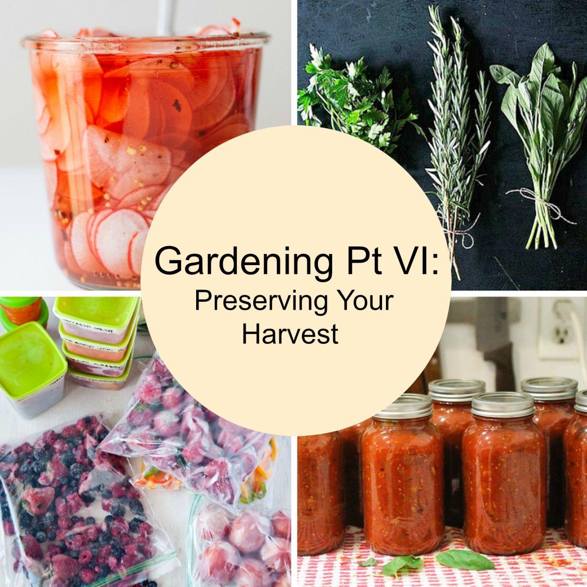 Gardening Pt VI: Preserving Your Harvest