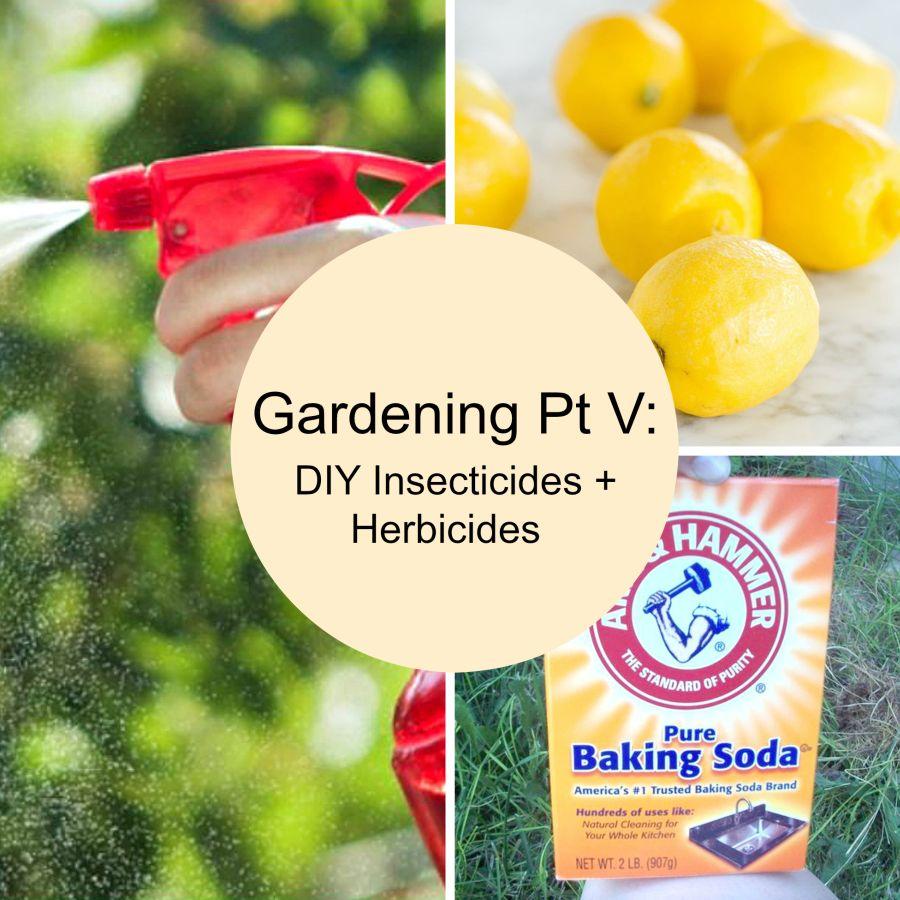Gardening Pt V: DIY Insecticides + Herbicides