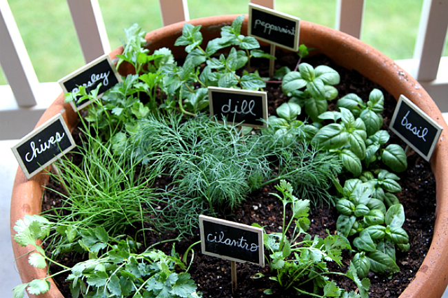 Grow A Garden In Pots 15 phenomenal indoor herb gardens one pot garden view in gallery workwithnaturefo