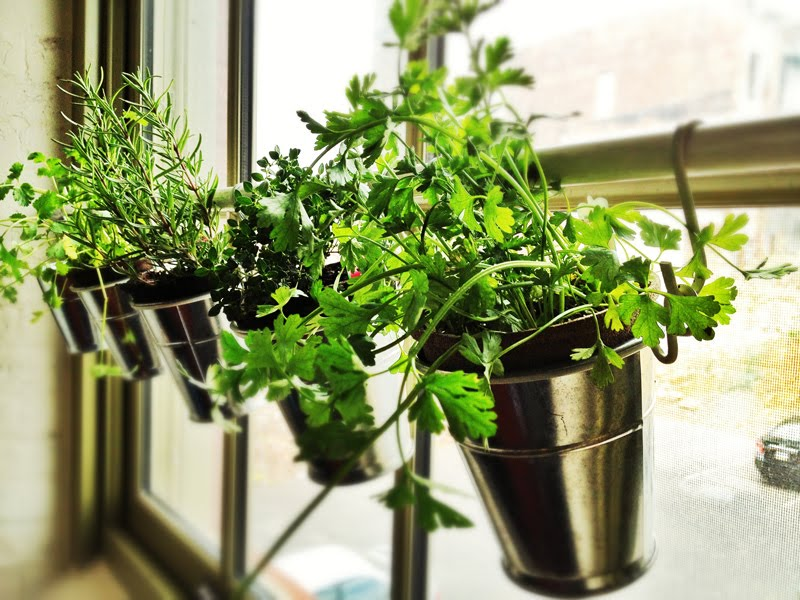 15 phenomenal indoor herb gardens Kitchen windowsill herb pots