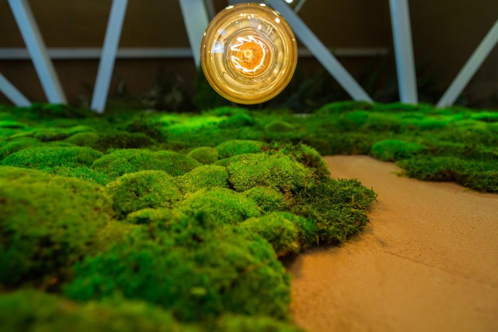 SHIFT-restaurant-moss-wall-closeup