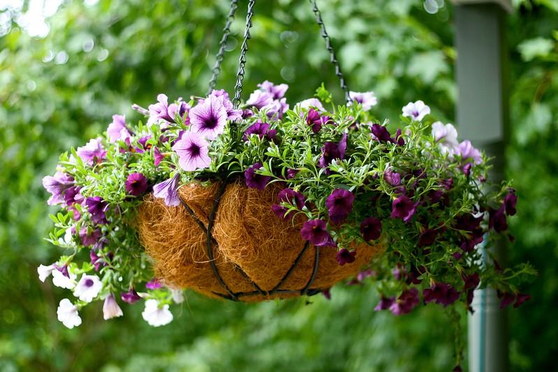 landscaping ideas Porch Petunias