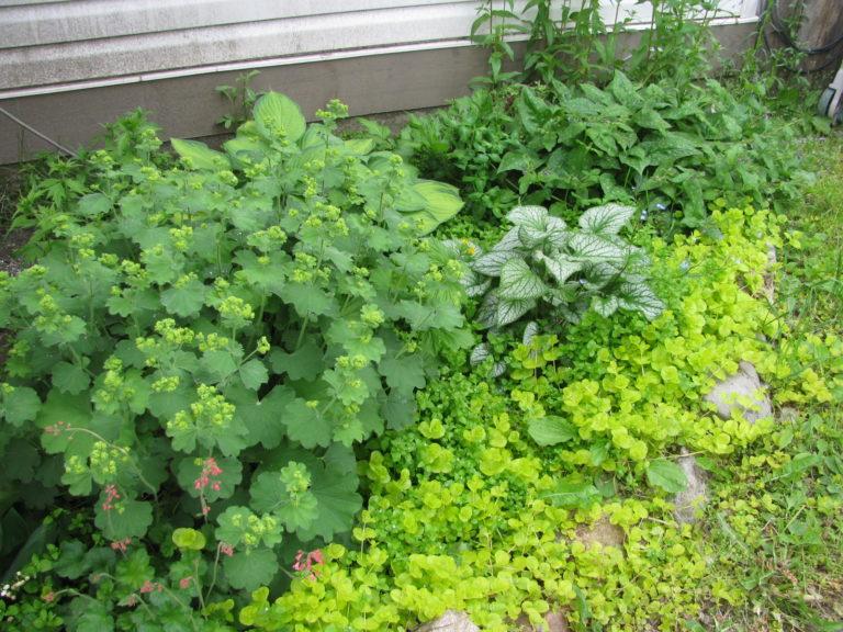 landscaping ideas Shade Loving Plants