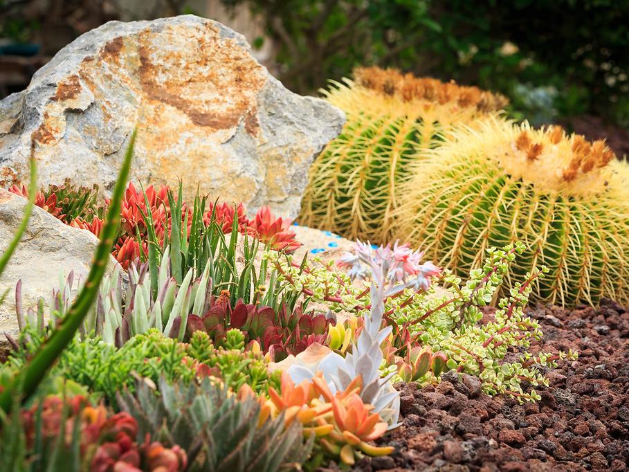 landscaping ideas Succulent Rock Garden