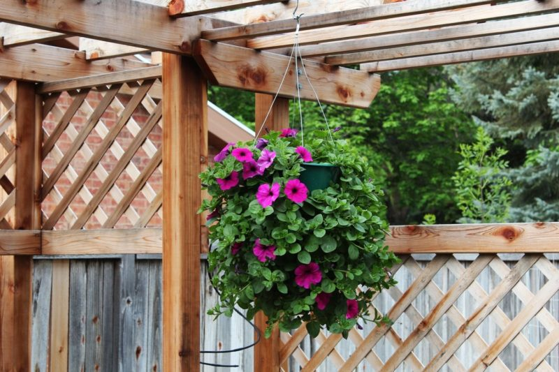 How to Plant a Professional – Looking Hanging Flower Basket