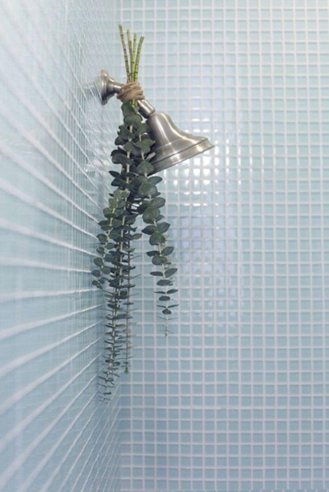 shower head eucalyptus