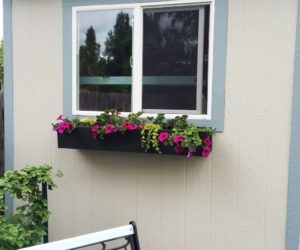 Step-by-Step Guide to Planting a Window Box