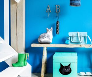 Top 10 Ingenious Ways to Hide Your Cat's Litter Box